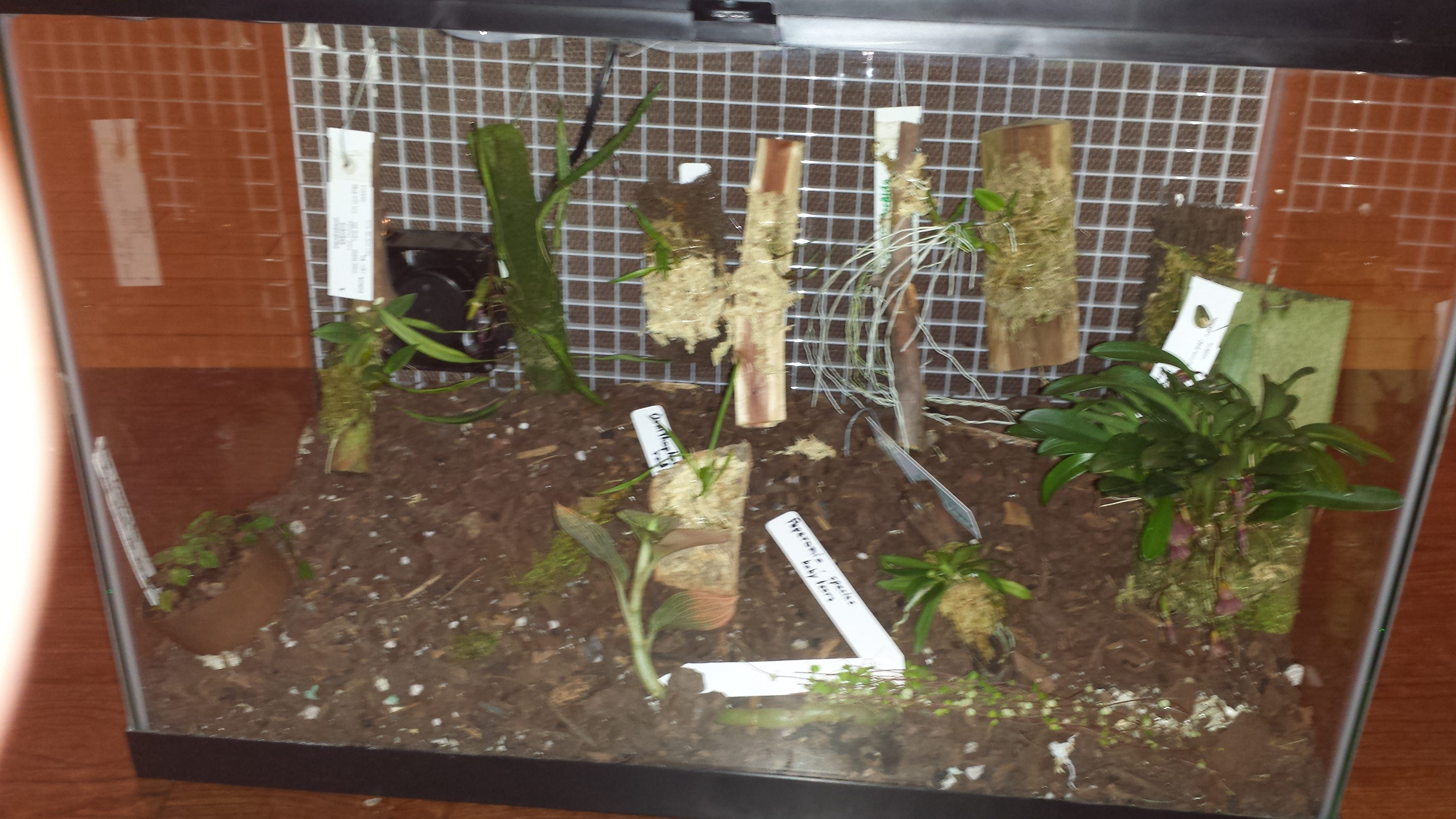 Introductory Discussion Of The Setup Of A Terrarium For Growing